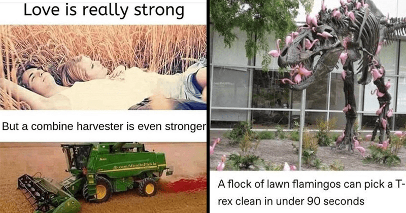 Funny random memes, dog memes, cat memes, pet memes, animal memes, tumblr posts, funny tumblr, tumblr shitposts, animals | Love is really strong But combine harvester is even stronger. tumblr stunningpicture flock lawn flamingos can pick T- rex clean under 90 seconds pardonmewhileipanic nature is brutal