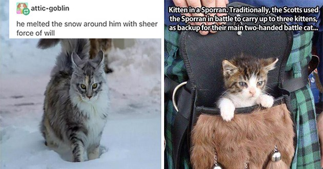 cats memes cute funny animals vids gifs pics aww cat lol   attic-goblin he melted snow around him with sheer force will pic of a very fluffy hairy cat standing in a hole in the snow. cute baby cat in a furry pouch pocket on top of tartan print skirt Kitten in a Sporran. Traditionally Scotts used Sporran battle carry up three kittens, as backup their main two-handed battle cat.