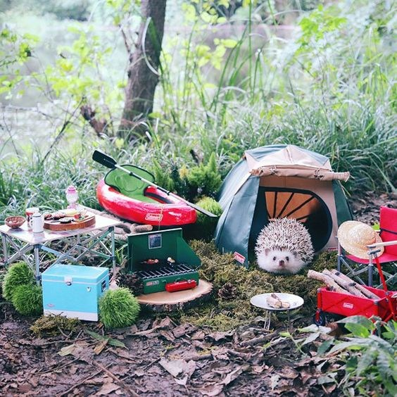 cute hedgehog goes on a camping trip | cute little hedgehog and all the stuff for its trip, forest scene miniature tent with folding door flap, barbecue with sticks in it, grill, tiny cooler, small picnic table filled with tiny foods, a little kayak with paddles in it and a miniature straw hat
