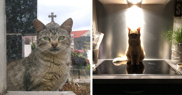 cats sacred holiness pics funny cool god godly animals spiritual power | grey cat standing in a window in front of a church building so that it looks as if the cat is wearing a cross on its head, cat sitting on a kitchen counter in front a light source appearing to glow cast in light shadow