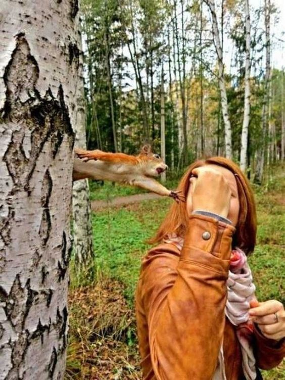 Amazing animal photos | funny perfectly timed photo taken at the right moment forest park squirrel jumping out from a tree reaching for a red haired woman's hand holding a nut food