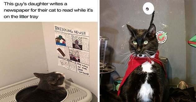animals cats pics blessed images pics cute aww pure wholesome | This guy's daughter writes newspaper their cat read while 's on litter tray BREAKING NEWS more great content! black and white tuxedo cat wearing a red cape around its neck and an antennae coming out of its head
