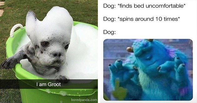 doggo dogs funny memes lol cute aww animals dog | i am groot tiny dog taking a bubble bath in a green bucket covered with soap suds that make it look like the character groot from marvel's guardians of the galaxy. pleased sulley from monsters inc. Dog finds bed uncomfortable Dog spins around 10 times Dog: