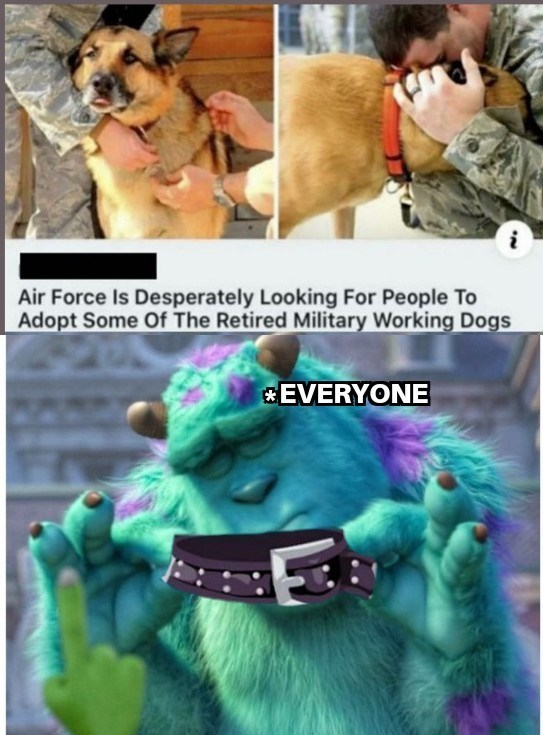 top ten 10 wholesome memes daily | Air Force Is Desperately Looking People Adopt Some Retired Military Working Dogs EVERYONE sulley monsters inc collar