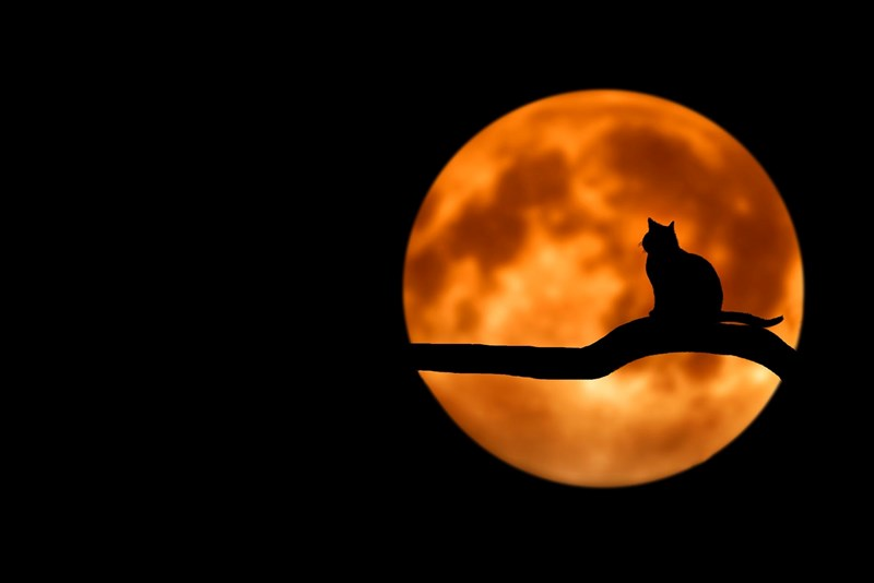 What Does It Mean When You Dream About Cats | dark photography black night sky orange full moon round shadow silhouette of a tree branch across the moon and a cat sitting on it symbolism dream analysis interpretation