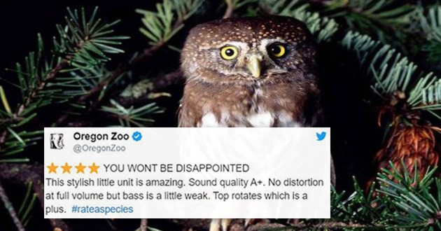 zoos amazon review animals twitter tweets funny lol cute rate rating | Owl Oregon Zoo O @OregonZoo WONT BE DISAPPOINTED This stylish little unit is amazing. Sound quality No distortion at full volume but bass is little weak. Top rotates which is plus rateaspecies O 2,440 7:03 PM Mar 9, 2018