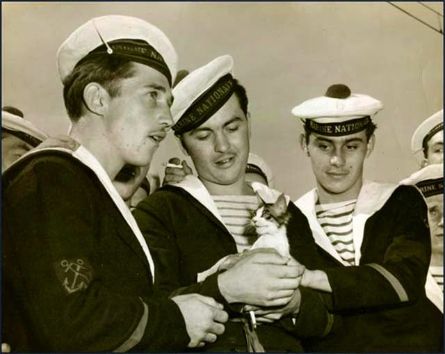 Vintage photos of cats on US ships | black and white photograph of three sailors marines navy dressed in sailor suits and caps with pom poms on top, the one in the middle is cradling a kitten in his arms and the other two are reaching to pet it