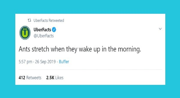 animal facts | tweet by 17 UberFacts Retweeted UberFacts @UberFacts Ants stretch they wake up morning. 5:57 pm 26 Sep 2019 Buffer 2.5K Likes 412 Retweets