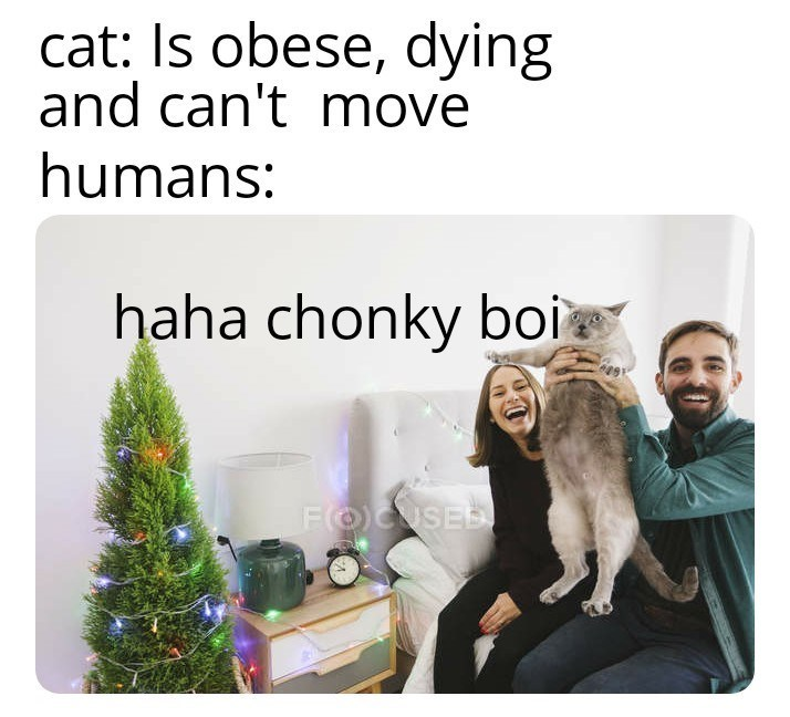 top ten 10 daily memes | cat: Is obese, dying and can't move humans: haha chonky boi FOUSE stock photo couple holding up an overweight cat