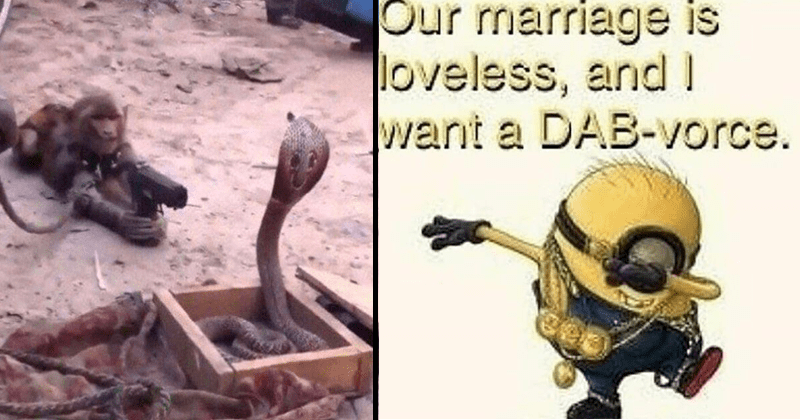 Funny cursed images and cringe pics | a monkey with a rope tied around its hand lying on sandy ground pointing a gun at a cobra standing up from a box | minions despicable me Our marriage is loveless, and want DAB-vorce.