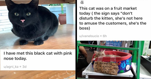 cats cute funny pics animals aww | This cat on fruit market today sign says don't disturb kitten, she's not here amuse customers, she's boss ivanelsucio NO MOLESTAR IA gatitA CEllA NO ESTAs PARA PVERTiR Alos elientes | have met this black cat with pink nose today agni_ka