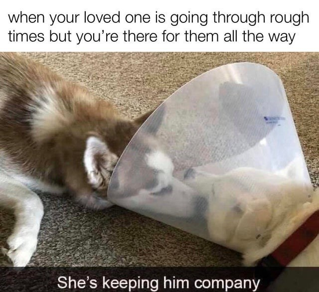 top ten 10 wholesome memes daily | loved one is going through rough times but there them all way She's keeping him company two dogs in a cone of shame