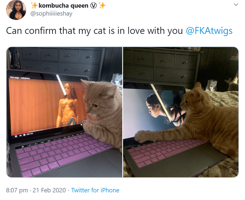 Cats Are Obsessed With Watching The Videos of The British Singer, FKA Twigs | can confirm that my cat is in love with you @fkatwigs | pics of a cute ginger cat sitting on a the keyboard of a laptop playing a fka twigs music video and hugging the screen