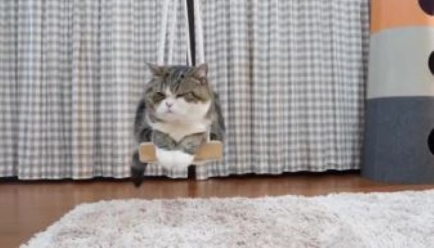 cats swing cute funny animals gifs | cute fuzzy fluffy grey and white cat resting chilling with its eyes closed and paws together on a swing above a white fur rug tail hanging down