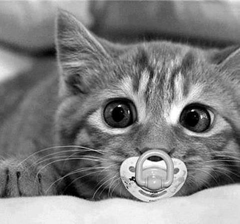 cute cats with pacifiers | cute baby black and white big round eyes kitty cat kitten lying down on its tummy with a baby pacifier in its mouth whiskers paws adorable