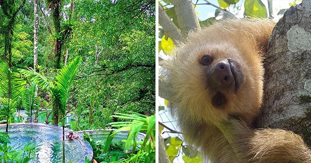 sloth sloths costa rica adventure beautiful stunning animals relax relaxation vacation | forest view green trees round circular water pools under greenery plants trees | cute pic of a sloth looking at the viewer with its head tilted to the side
