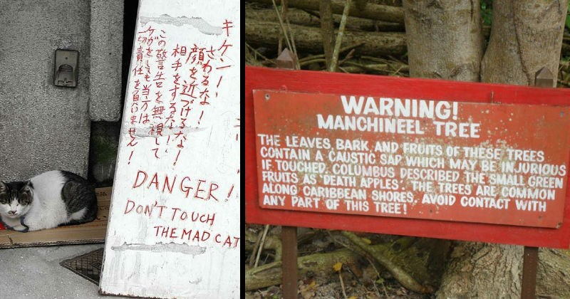 Warning signs that are very scary | DANGER! DON'T TOUCH THE MAD CAT | WARNING! MANCHINEEL TREE LEAVES, BARK AND FRUITS THESE TREES CONTAIN CAUSTIC SAP WHICH MAY BE INJURIOUS IF TOUCHED COLUMBUS DESCRIBED SMALL GREEN FRUITS AS DEATH APPLES TREES ARE COMMON ALONG CARIBBEAN SHORES AVOID CONTACT WITH ANY PART THIS TREE!