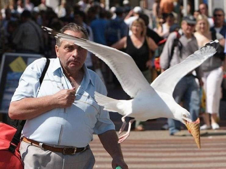 seagulls birds funny stealing animals sky rats wtf lol pics | funny photo of a white seagull flying low and snatching an ice cream cone from a man's hand in the middle of the street stealing food thief bird photo taken at the right moment perfectly timed