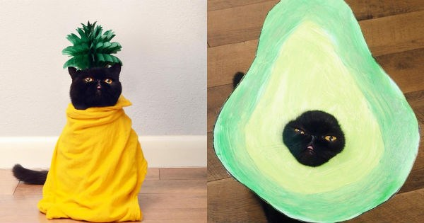 costume halloween pineapple avocado Cats - 1069317
