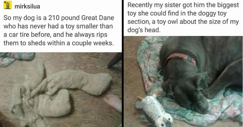 Tumblr Thread about a big great dane that adopts a tiny owl toy.