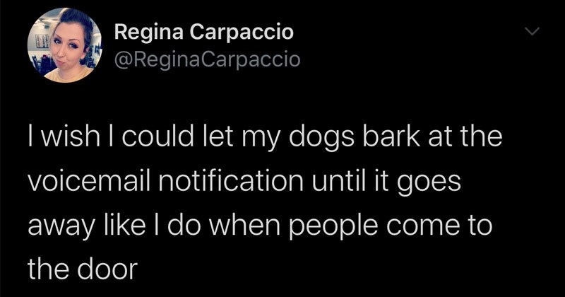 Funny random tweets | Regina Carpaccio @ReginaCarpaccio wish could let my dogs bark at voicemail notification until goes away like do people come door 1:53 PM 2/24/20 Twitter Android