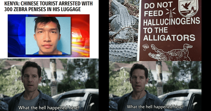 funny memes featuring paul rudd as ant-man marvel avengers | KENYA: CHINESE TOURIST ARRESTED WITH 300 ZEBRA PENISES HIS LUGGAGE hell happened here? DO NOT FEED HALLUCINOGENS TO THE ALLIGATORS hell happened here?