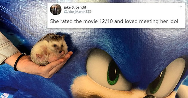 sonic hedgehog movies aww cute tweets twitter thread hedgehogs animals | jake bandit @Jake_Martin333 She rated movie 12/10 and loved meeting her idol pic of a tiny hedgehog held in a person's palm near a poster for the sonic the hedgehog live action movie