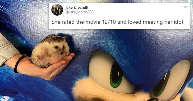 sonic hedgehog movies aww cute tweets twitter thread hedgehogs animals