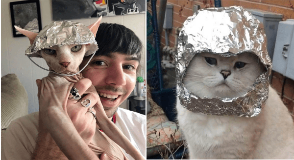 Cats wearing tinfoil hats | conspiracy theory brainwaves mind control sphynx hairless cat wearing a helmet shaped tinfoil hat and held up to the camera by a smiling man | fluffy white cat wearing a space helmet made of silver tinfoil