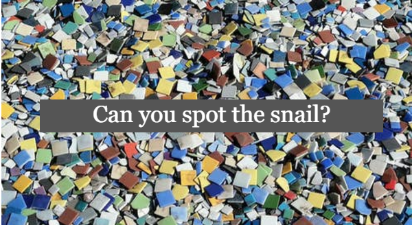 Animals hiding in photos | can you spot the snail? image of colorful square shapes tiles pile mess camouflage where a snail is hidden somewhere