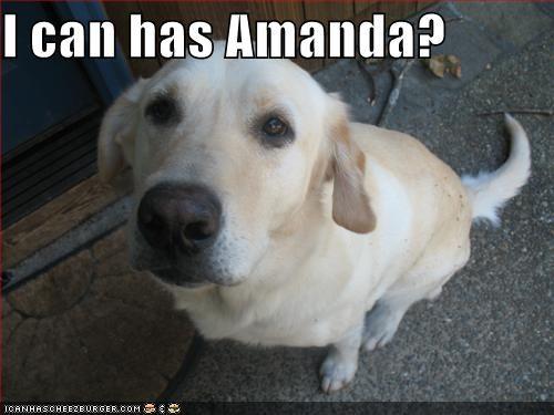 I can has Amanda?