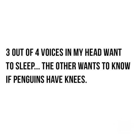 Fresh animal memes | 3 OUT 4 VOICES MY HEAD WANT SLEEP OTHER WANTS KNOW IF PENGUINS HAVE KNEES.