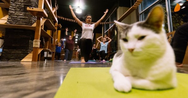 Cats,cat cafe,seattle,yoga