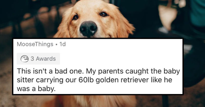 AskReddit replies to the ridiculous things that people saw on nanny cams | MooseThings 1d 3 Awards This isn't bad one. My parents caught baby sitter carrying our 60lb golden retriever like he baby.