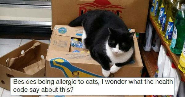 Cats bodega new york yelp - 1074693