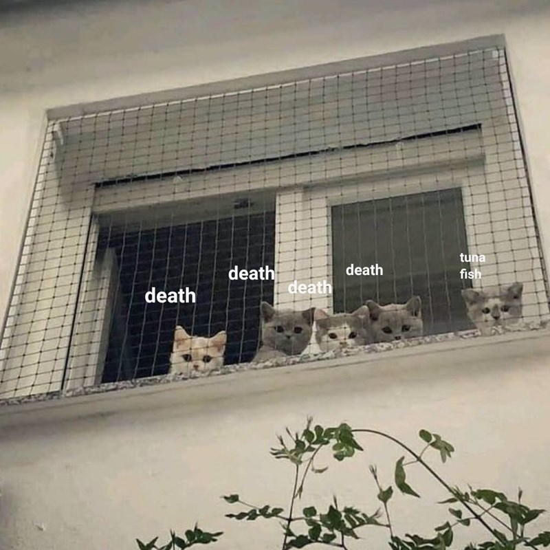 Cat Councils That Will Decide Your Fate | five fluffy kittens looking down through a net over a window above the viewer as if they're a council judging someone death tuna fish death death death