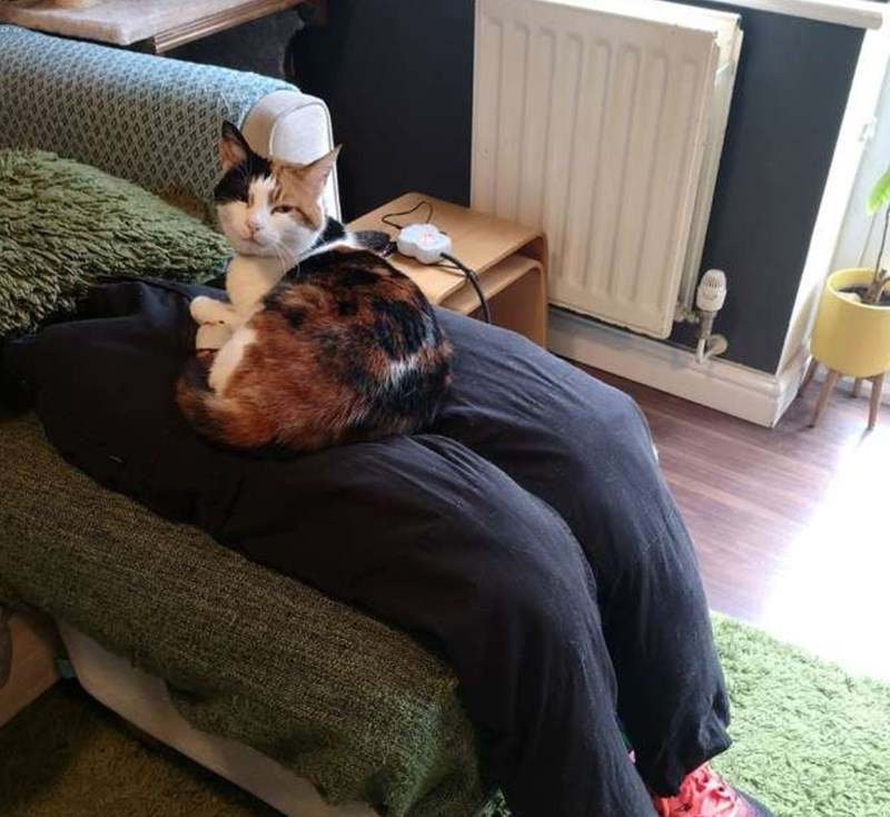 """Couple Create """"Fake Lap"""" For Their Clingy Cat 