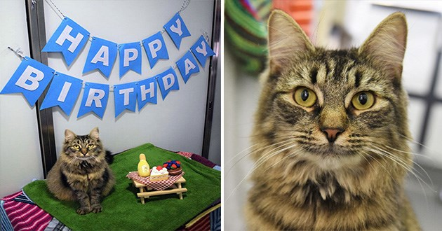 cat birthday party adopt shelter animal aww heartbreaking cats | cute gray fluffy cat with big green eyes sitting on a green towel next to a miniature picnic table with cat treats arranged on it like cakes and a blue letter sign that reads HAPPY BIRTHDAY hanging above