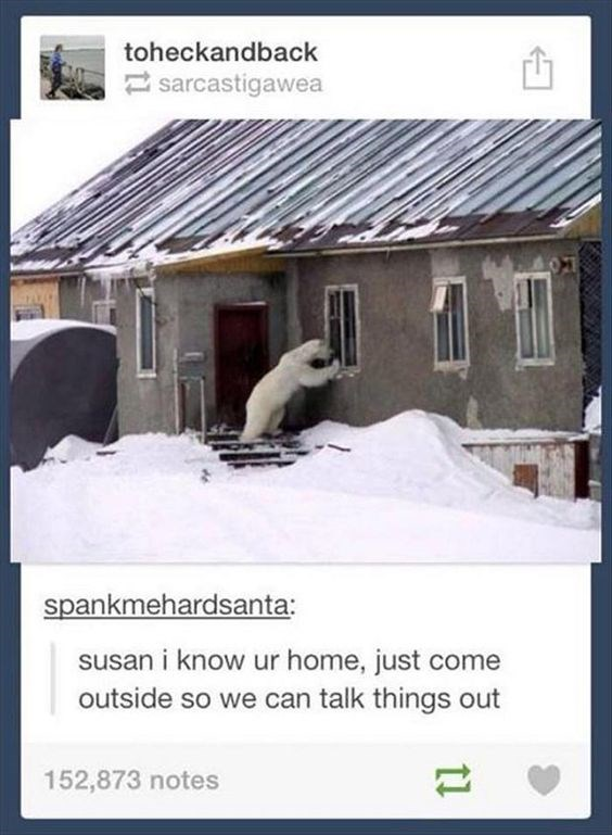 Funny Tumblr posts About Bears | toheckandback sarcastigawea spankmehardsanta: susan know ur home, just come outside so can talk things out | toptumbles.com eggplont: leadhooves: housewifeswag look on their faces though. its like omfg, charles. charles, charles HUMAN IS WAVING. WAVE BACK, HURRY omg cutest ever HNNNNNN NNNNNNG THEY LOOK SO FAT