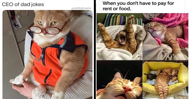 cats memes funny cute lol animals | CEO dad jokes ecatitolovers funny cat in orange vest and red rimmed glasses | don't have pay rent or food four pics of a striped orange cat sleeping in different positions