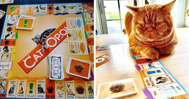 monopoly cats catopoly funny cute board games | CATNIP WATER CAT Egyptian Somali CATS FLEAS PROWLING DOG Turkish BURMESE PERSIAN BRITISH | orange cat sitting with its paws on top of monopoly cards
