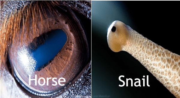 Beautiful Close-Up Photos of Animal Eyes By Armenian Photographer | big brown zoom in horse eye with lashes | snail eye at the tip of a tentacle