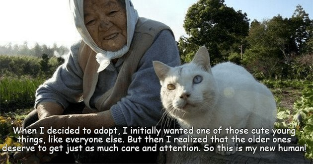 funny cat memes lolcats cats animals lol aww cute | decided adopt initially wanted one those cute young things, like everyone else. But then realized older ones deserve get just as much care and attention. So this is my new human!