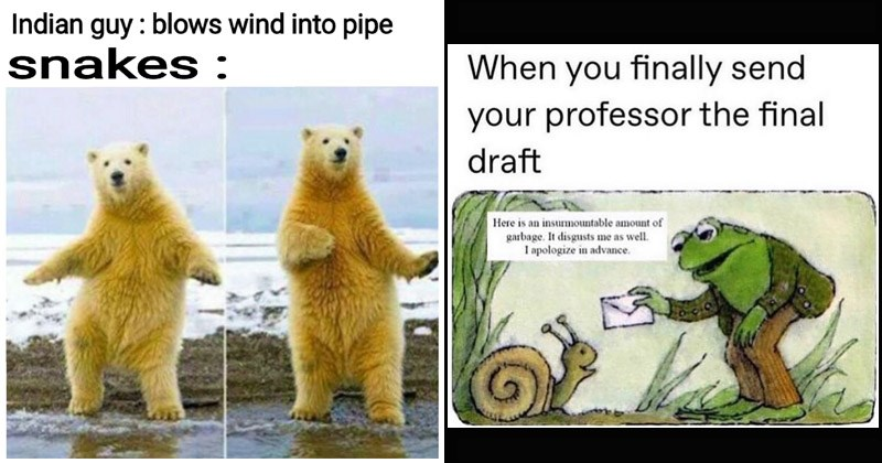 Funny random memes | Indian guy blows wind into pipe snakes : polar bear standing upright dancing | legallybeagle finally send professor final draft Here is an insurmountable amount garbage disgusts as well apologize advance. frog hanging an envelope to a snail