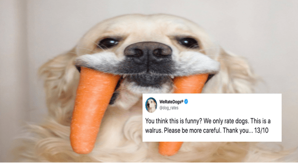 "People Are Sending ""We Rate Dogs"" Photos Of Things That Clearly Are Not Dogs 