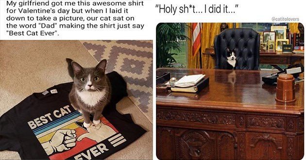 "caturday cats funny memes cat lol aww cute animals | My girlfriend got this awesome shirt Valentine's day but laid down take picture, our cat sat on word ""Dad"" making shirt just say Best Cat Ever BEST CAT EVER 