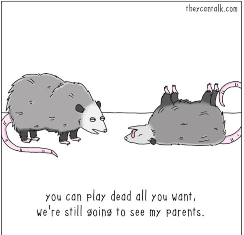 Animals Dealing With Relationship Problems | possums opossum couple comic theycantalk.com can play dead all want still going see my parents.