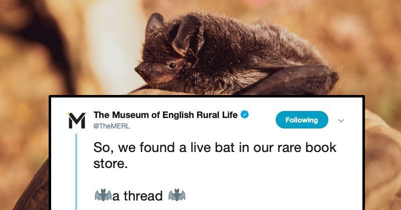 Funny Twitter thread on a bat that ends up in a library | tweet by Museum English Rural Life @TheMERL Following So found live bat our rare book store thread