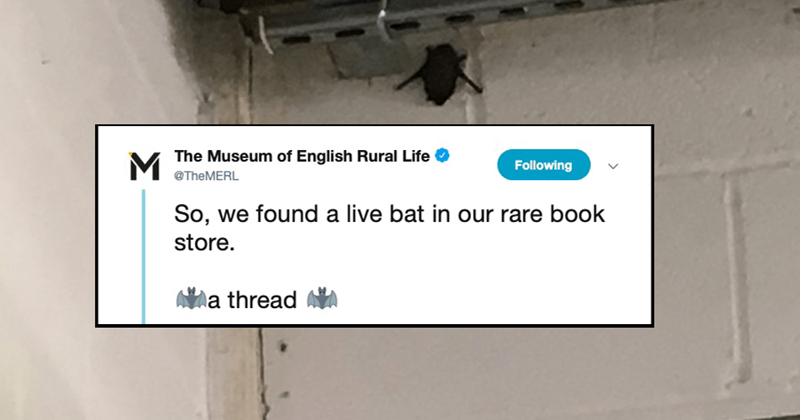 funny twitter thread about english museum of rural english life finding a bat in their bookstore book archive library | tweet by Museum English Rural Life @TheMERL Following So found live bat our rare book store thread