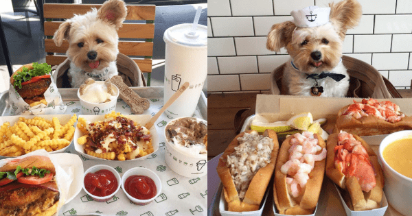 dogs instagram food foodie - 1078789